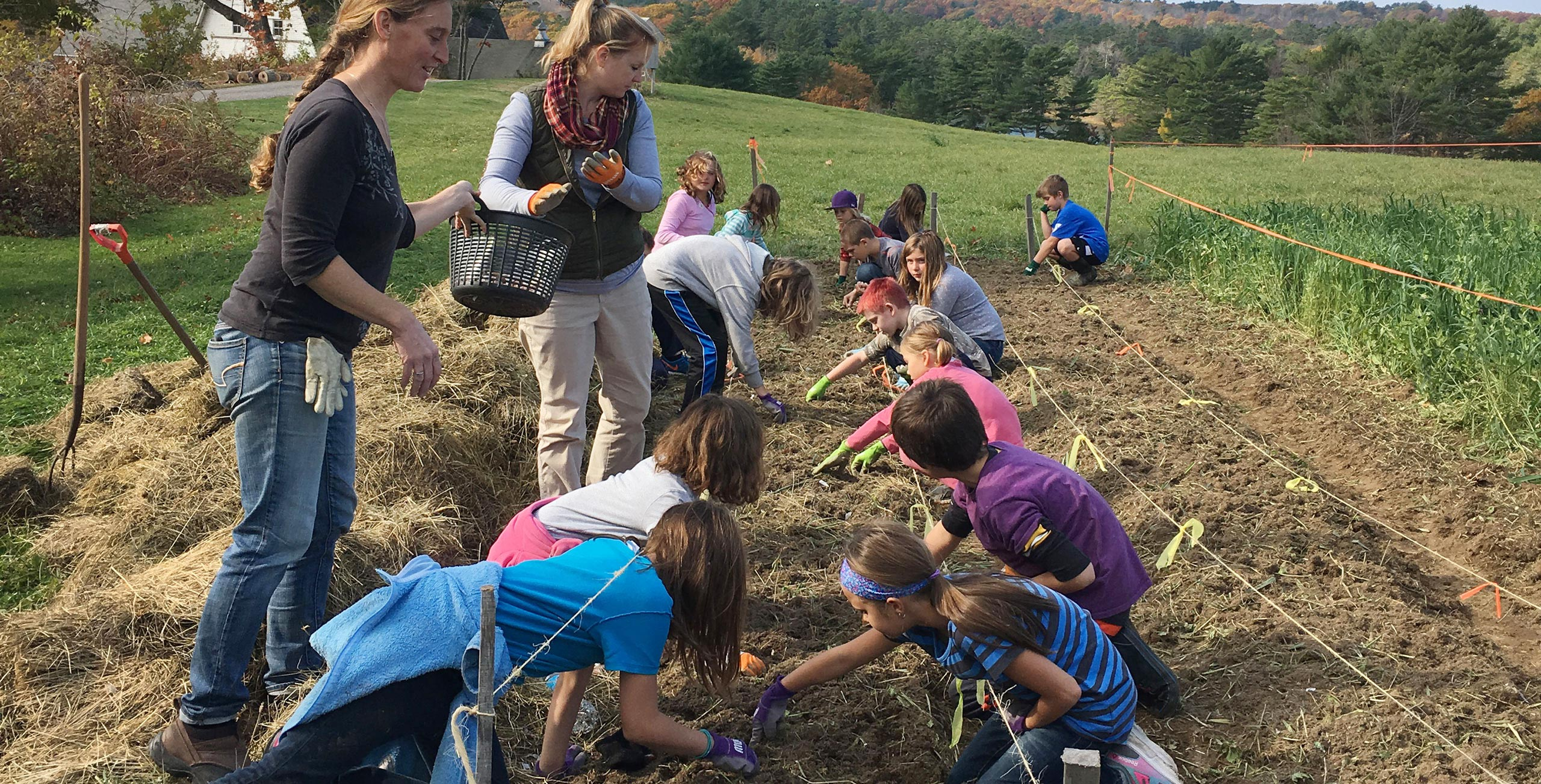 students planting garlic